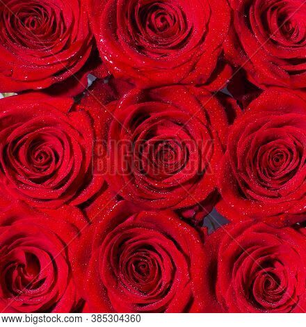 Red Rose Flower, Petals. Bouquet Of Flowers, Fresh Red Rose. Collage Of Red Roses. Bouquet Of Fresh