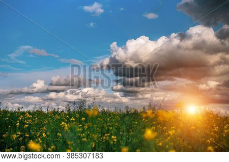 Canola Field At Sunset, Landscape On A Background Of Clouds. Canola Biofuel, Organic.