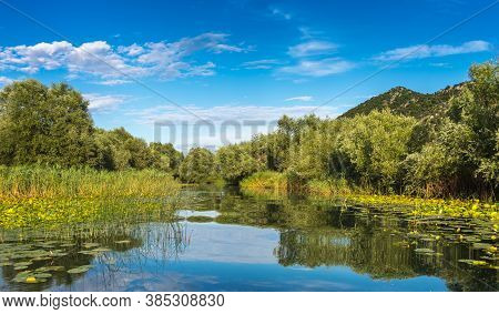 View The Coast Of Skadar (shkoder) Lake, Overgrown With Grass, With Reflection The Water. Montenegro