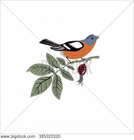 Rosehip Branch With Finch Bird Isolated On A White Background