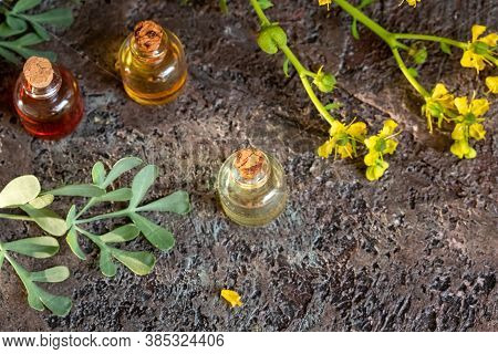 Bottles Of Essential Oil With Fresh Common Rue, Or Ruta Graveolens Twigs On A Dark Background