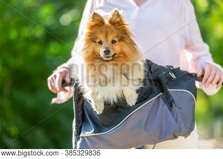 Dog Looks Cute Out Of A Bicycle Basket
