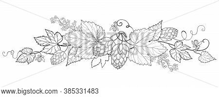 Vector Bunch Of Outline Hop With Leaf And Ornate Cones In Black Isolated On White Background. Horizo