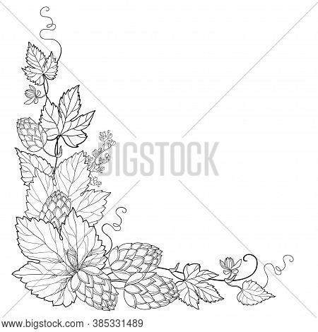 Vector Corner Bunch Of Outline Hop With Leaf, Cones And Flower In Black Isolated On White Background