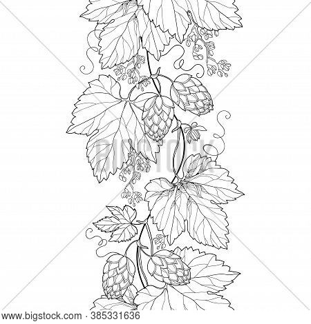 Vector Vertical Seamless Pattern With Outline Hop With Ornate Leaves And Cone In Black On The White