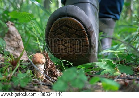 Close Up View Of Red-capped Scaber Stalk (leccinum Fungi) In The Forest And Mushroom Picker's Foot P