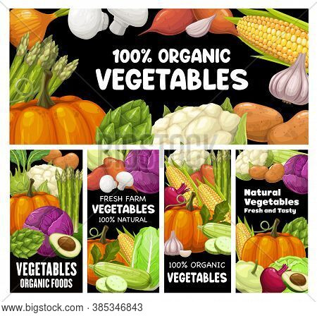 Vegetables Vector Banners, Raw Veggies Potato, Avocado And Pumpkin With Asparagus, Corn, Broccoli An