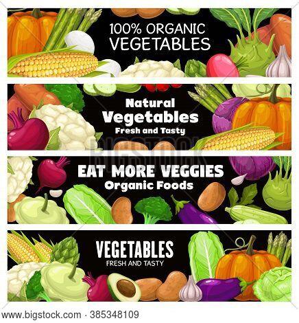 Vegetables Vector Banners, Raw Veggies Squash, Cauliflower With Beetroot. Potato, Avocado And Pumpki