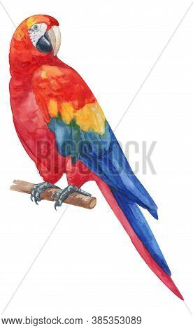 Watercolor Hand Painted Rainbow Ara Parrot. Red, Blue, Yellow, Green Exotic Bird On Branch. Tropical