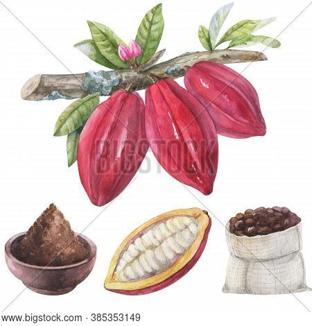 Watercolor Hand Painted Chocolate Elements. Set Cocoa Beans On A Branch With Flowers, Leves, Cocoa P