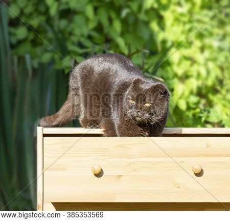 Cat On The Dresser Wooden Furniture Nature Background Sunlight
