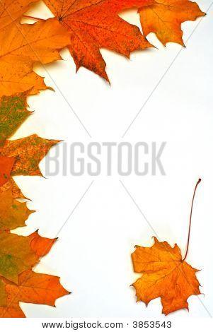 Leaves On Autumn,