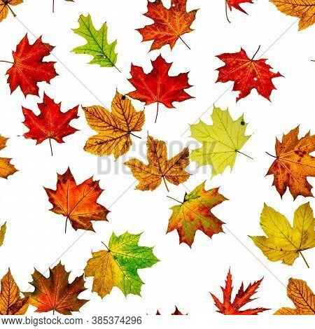 Autumn Leaves White Seamless Pattern Background. Colorful Maple Foliage. Season Leaves Fall Backgrou