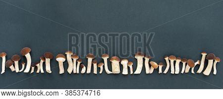 Banner. Mushrooms, Honey Agarics On A Black