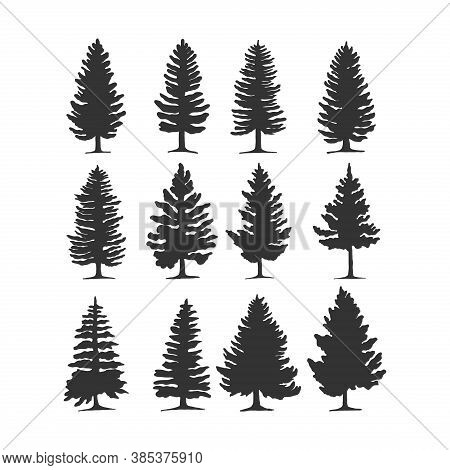 Set Of Pine Trees Silhouette Vector. Pine Trees In Grey Color. Tree Icon Vector. Tree Logo. Tree Vec