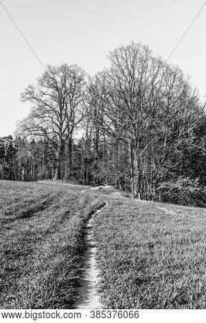 Narrow Footpath In Leading To Forest Through Lush Green Springtime Meadow. Black And White Image.