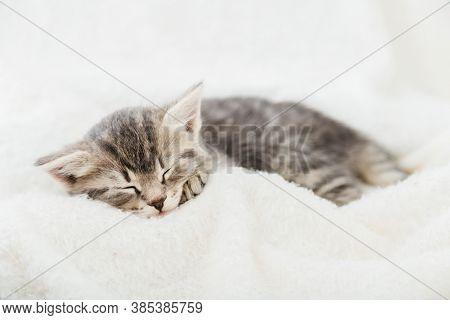 Striped Tabby Kitten Sleeping On White Fluffy Plaid. Portrait With Paw Of Beautiful Fluffy Gray Kitt