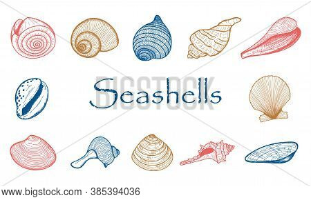 A Set Of Empty Seashells. The Sketch Shells Of Molluscs, Shellfish, Mussels, Nautilus.the Engraved D