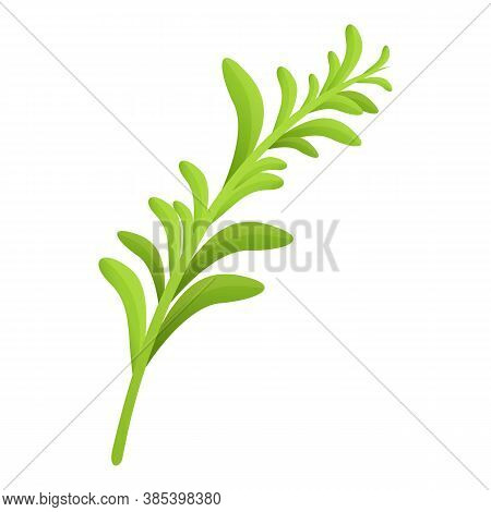 Rosemary Aroma Icon. Cartoon Of Rosemary Aroma Vector Icon For Web Design Isolated On White Backgrou