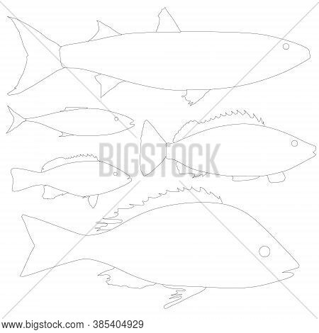 Set With Contours Of Various Fishes Isolated On A White Background. Vector Illustration