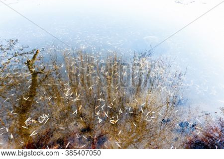 autumn leaves under water, nature background