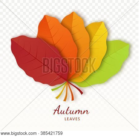 Autumn Leaf Poster Isolated On Transparent Background. Botanical Forest Plants Or September October