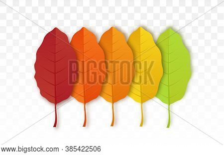 Autumn Leaf Isolated On Transparent Background.  Set Of Bright Autumn Leaves. Yellow Autumnal Garden