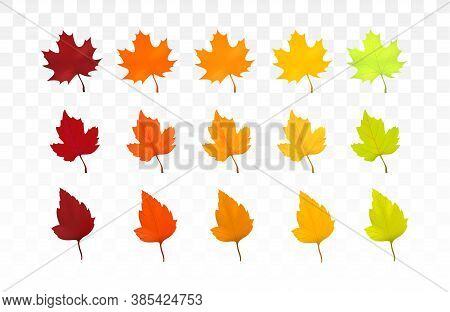 Autumn Leaves Set. Leaves With Watercolor Texture, Vector Illustration. Good For Social Media, Promo