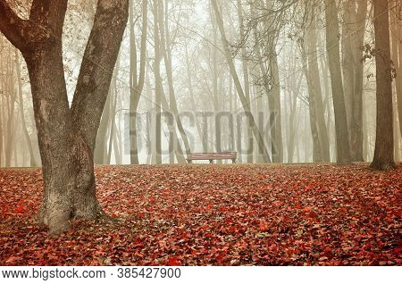 Autumn landscape. Wooden lonely bench under the bare autumn trees in the autumn park in dense fog. Creative filter processing. Autumn foggy landscape, colorful autumn park view. Autumn park scene in foggy autumn day