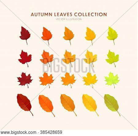 Set Of Bright Realistic Autumn Leaves. Autumn Design Element. Cartoon Leaf Collection In Flat Style.