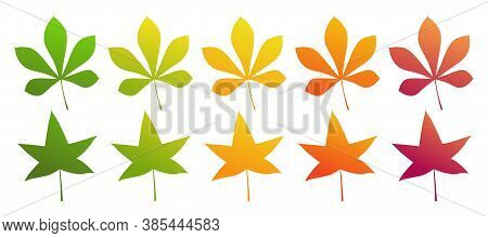 The Leaf Of The Chestnut And Sweet Gum Tree. Set Of Different Autumn Colors. Isolated On A White Bac