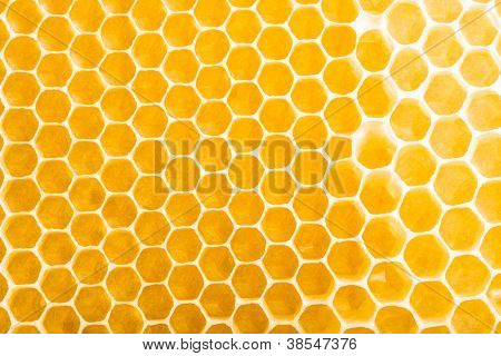 honeycombs unfinished