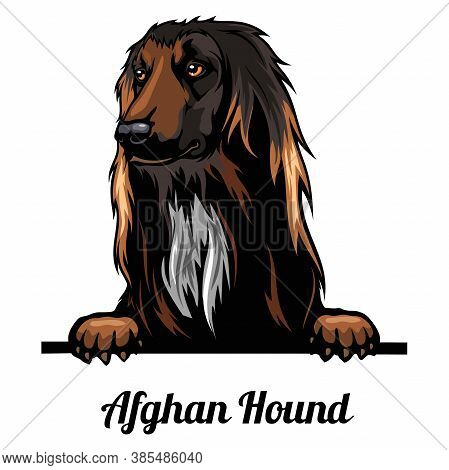 Peeking Dog - Afghan Hound - Dog Breed. Color Image Of A Dogs Head Isolated On A White Background