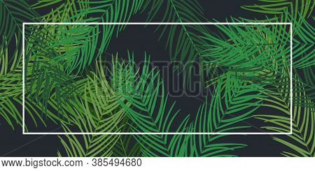 Leaf Palm Tree On Black Background. Tropical Tree Leaves Frame. Jewish Torah Lulav Date Palm. Tradit