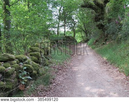 Foot Path Through Forest With Moss Covered Stone Fence On The Side. Galicia, Spain