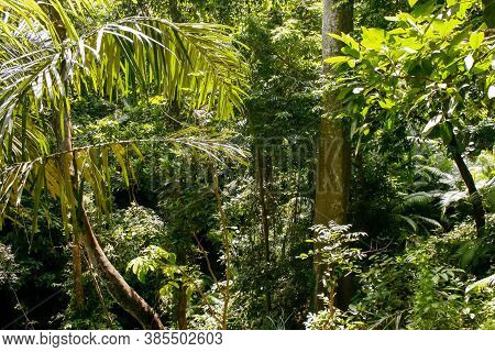 This Rainforest Is Alive And Well. It Includes Multiple Green Plant Varieties, Straight Trunks And C
