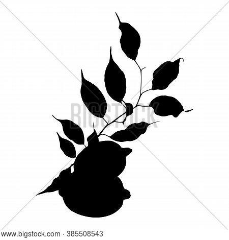 Monochrome Black Lemon Citrus Fruit Branch Leaves Silhouette Isolated On White Background Vector Art