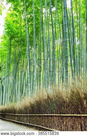 Oriental Tourist Travel Destinations. Sagano Green Bamboo Forest In Japan.