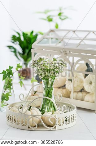 Thanksgiving table decoration with white pumpkins and sweet garlic flowers (Tulbaghia violacea)
