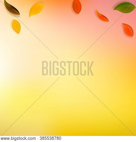 Falling Autumn Leaves. Red, Yellow, Green, Brown Neat Leaves Flying. Gradient Colorful Foliage On Re