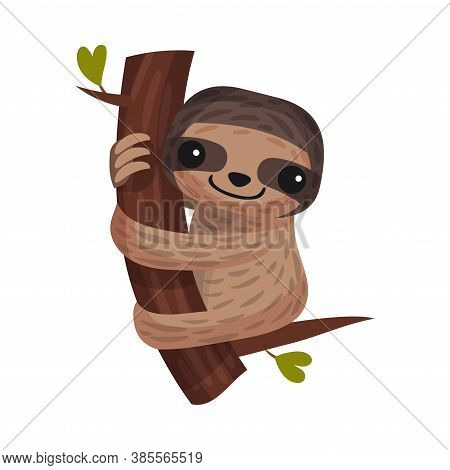 Arboreal Sloth Hugging Tree Branch As African Animal Vector Illustration