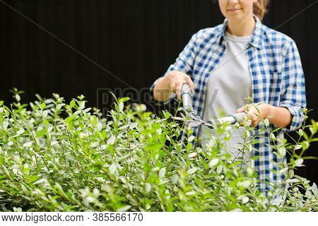 gardening and people concept - woman with pruner or pruning shears cutting branches at summer garden
