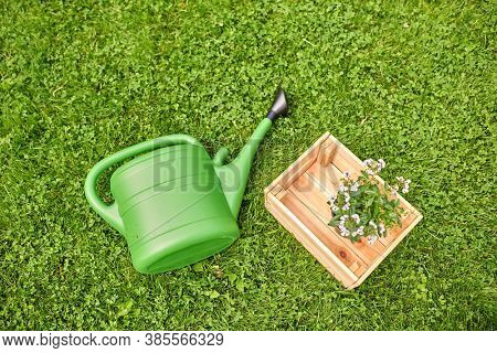 gardening concept - green watering can and flowers in wooden box on grass at summer garden