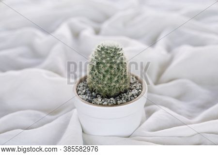 Cactus In White Pot Placed On  Wrinkled White Cloth, Soft Focus.