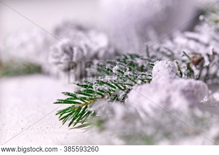 Christmas card - Christmas tree branches on the wooden background