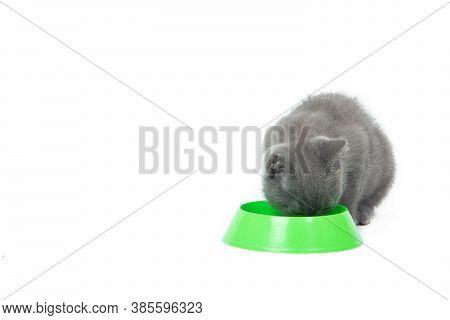 The Kitten Eats Food From A Bowl . A Kitten Eats Food On A White Background. Kitten Nutrition. Selec