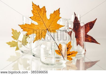 Autumn leaves in vases on white bckground
