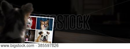 Dogs On Computer Having A Video Call. Technology Concept With Copy Space.