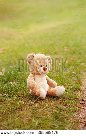 Cute Lost Abandoned Soft Plush Stuffed Teddy Bear Sitting On Ground. Child Soft Toy On Green Grass I
