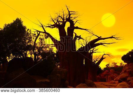 African Awesome Sunset With Baobab Tree Silhouette